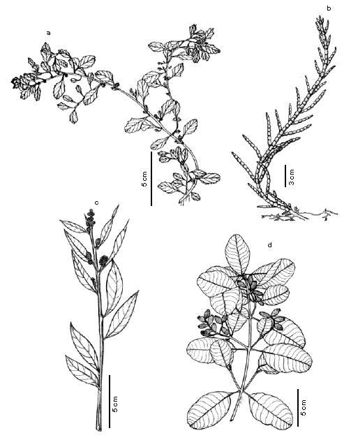 Flores unisexual ejemplos de diptongos
