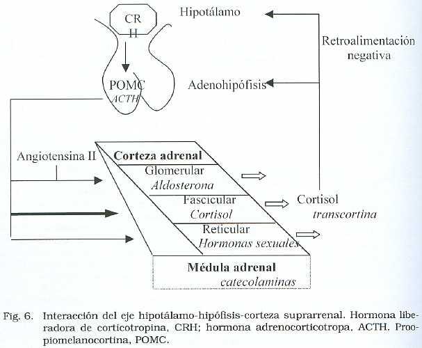 Síndrome de Ovario Poliquísticos de Origen Extraovárico. Revisión