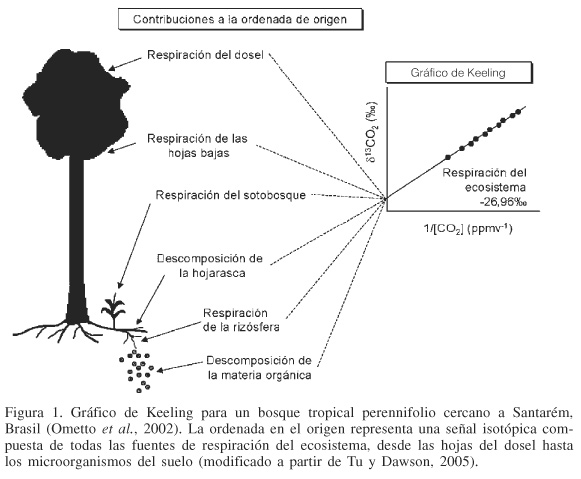 EL USO DE ISÓTOPOS ESTABLES EN BIOLOGÍA TROPICAL